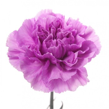 flower_muse-1-3.jpg